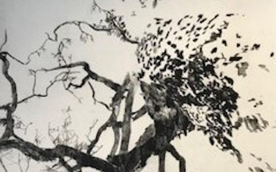 2021: Section 4 – North Jacklin Emergent Artists Arts Practice Award